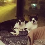 Balu & Bilbo