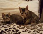 Becca & Baldric