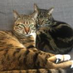 Enzo and Yudo