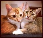 Flora & Ferdinand