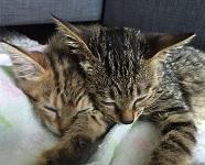 Liza & Lydia